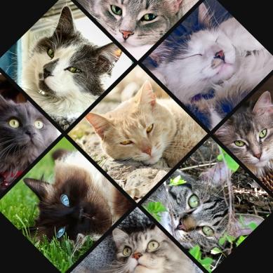9 kitties loved web